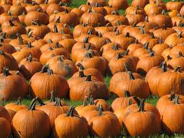 Best Pumpkin Patches In Cincinnati by Fall Festival