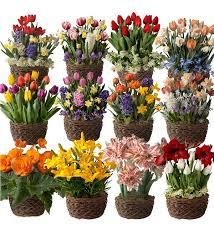 twelve months of flower bulb gift gardens ships each month