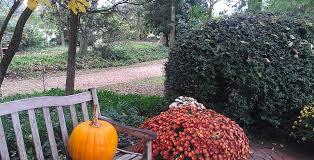 Clarke Farm Pumpkin Patch Chesapeake Va by Pumpkin Patches In Chesapeake Virginia