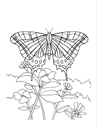 Free Coloring Pages Flowers And Butterflies Printable