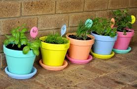 Garden Ideas Using Pots dayri