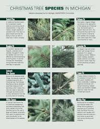 Christmas Tree Species by Christmas Tree Species A Useful Guide To Pick The Right Christmas