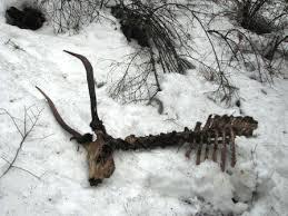 shed hunting page 2 huntingnet com forums