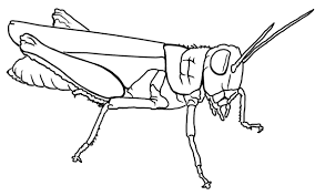 Grasshoppers Kids Stuff Coloring Page