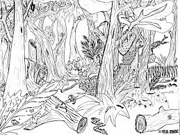 Forest Coloring Pages Hard Animals Color Printable