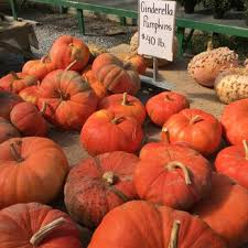 Pumpkin Patch Denver Pa by Janoski U0027s Farm And Greenhouse 11 Photos Farmers Market 1714