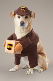 Chasing Fireflies Halloween Pajamas by Ups Driver Costume For Dogs Chasing Fireflies