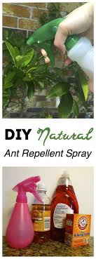 Get Rid of Pesky Ants NATURALLY with These 3 Household Ingre nts