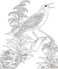 Related Coloring Pages Meadowlark And Goldenrod Nebraska State Bird Flower From