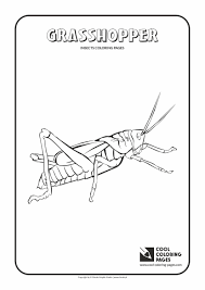 Charmingbeautiful Printable Grasshoppers Insect Coloring Pages For Kids 1