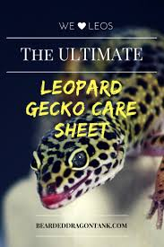 Bearded Dragon Shedding Process by The Ultimate Leopard Gecko Care Sheet Bearded Dragon Tank