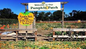 Pumpkin Picking Patchogue Ny by 9 Can U0027t Miss Weekend Events Long Island Pulse Magazine