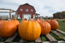 Central Iowa Pumpkin Patches by Making Magical Memories At Enchanted Acres Iowa Food And Family