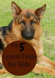 Non Shedding Dog Breeds Kid Friendly by Top 5 Guard Dogs For Kids Dogvills