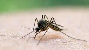 mücken vertreiben mit hausmitteln im garten im zimmer und