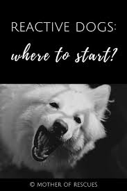 American Eskimo Shedding Problem by 31607 Best Dogs Images On Pinterest Dog Training Dog Care And