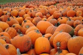 Grandville Mi Pumpkin Patches by 18 Life Lessons Everyone Learns Growing Up In Michigan