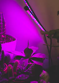 Grow Lamps For House Plants by Grow Light Review The Dainty Squid