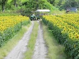 100 Bedner Upick Em At S Farm In Boynton South Florida SunSentinel