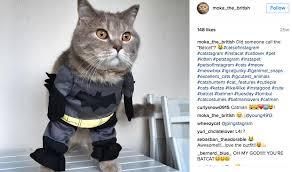 cat batman costume catcon 10 instagram cats in costumes