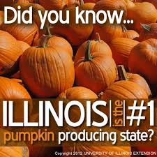 Pumpkin Farms Southern Illinois by 89 Best Illinois Home Sweet Home Images On Pinterest Illinois