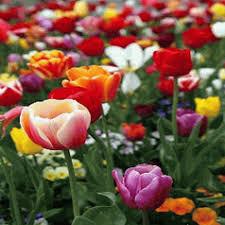 high quality flower bulbs vermont wildflower farm