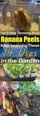 Fertilizer For Pumpkins Uk by Fertilizer From Banana Peels Egg Shells Coffee Grounds And