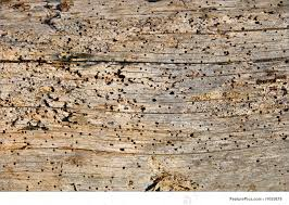 Texture: Barn Wood Texture - Stock Photograph I1055879 At FeaturePics Old Wood Texture Rerche Google Textures Wood Pinterest Distressed Barn Texture Image Photo Bigstock Utestingcimedyeaoldbarnwoodplanks Barnwood Yahoo Search Resultscolor Example Knudsengriffith The Barnwood Farmreclaimed Is Our Forte Free Images Floor Closeup Weathered Plank Vertical Wooden Wall Planking Weathered Of Old Stock I2138084 At Photograph I1055879 Featurepics Photos Alamy