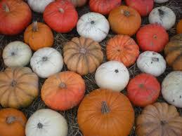 Clancy Pumpkin Patch Sf by Poem Sweet Poem October 2010