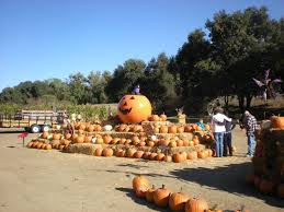 Wheatland California Pumpkin Patch by Pumpkin Patches In The Greater Sacramento Area Interactive Map