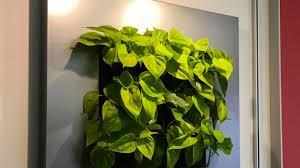 pflanzenlen so überleben ihre zimmerflanzen auch in