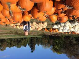 Oklahoma Pumpkin Patches 2015 by Halloween That U0027s Me In The Middle