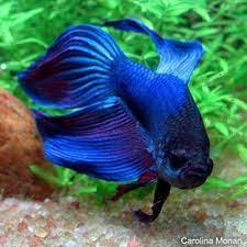 poisson eau froide pour aquarium acheter aquarium pas cher vrac it