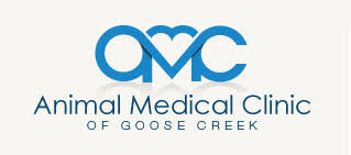 bed biscuit the animal medical clinic of goose creek