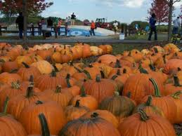 Pumpkin Patch Homer Glen Il by Pumpkin Farms Prepare For Halloween With Special Deals Frankfort