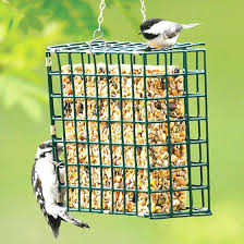 Suet Feeders For Bird Medium Image For Homemade Bird Feeders