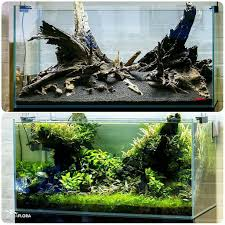 90x45x45cm Planted Dragon Stone Aquascape | Bridge, Plants And ... Photo Planted Axolotl Aquascape Tank Caudataorg New To Hobby Friend Wanted Make An For As Cheap Basic Forms Aqua Rebell Huge Tutorial Step By Spontaneity James Findley Aquascaping Videos The Green Machine Aquarium Beautify Your Home With Unique Designs Aquascape Waterfall Its Called Strenght Of A Thousand Stone Youtube September 2010 The Month Sky Cliff Aquascaping 149 Best Images On Pinterest Ideas Advice Please 3ft Forum