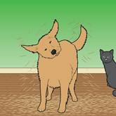 breeds of cats and dogs that shed the least most swiffer