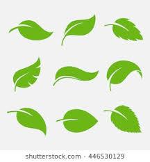 Leaf Shape Stock s & Vectors