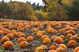 Best Atlanta Area Pumpkin Patch by Where To Drink Beer Near A Pumpkin Patch This Weekend Eater Dc