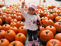 Sand Springs Pumpkin Patch by Pumpkin Patches In Pittsburgh 2016 Sand And Snow