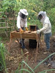 Top Bar Beekeeping Internship – Yerba Buena Farm Jamaica Bkeeping Equipment Decisions Kenyan Top Bar Hive Part 1 How To Transfer Brood Comb From Langstroth Frames A New Top Bar Che Guebee Apiary Heaven Building Our Hives Ipdence Homestead Musings On Hives For Economical Bee Keeping Make Youtube Culvating Change Agriculture And Food Security Blog Topbar Beehive Making Sustainable Life Getting Started In Your First Year As Management Pdf For Sale Boardman Feeder Talking With Bees