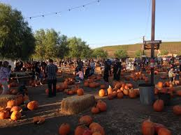 Napa Pumpkin Patch Hours by Annual Pumpkin Patch At Peltzer Farms Peltzerfarms
