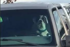 Video Of Dog Honking Truck Horn At Beban Park Going Viral ... Bull Horn Truck Mount Best Resource 12v 115db Your Air Snail For Car Boat S3x9 Horns 2018 Buyers Guide And Reviews Universal High Quality 136db Red Compact Silver Tone Single Trumpet Digital Electric Siren Loud Magic 18 Sounds Stebel Horn Motorbike 4x4 Suv Preowned 2016 Ram 1500 4wd Crew Cab 1405 Big In Wolo Bad Boy Wwwkotulascom Free Shipping 150db Super Dual Vehicle Motorcycle Auto Van Four Soundtone