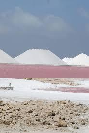 17 best discover bonaire salt flats images on pinterest salts