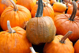 Pumpkin Patches In Arkansas by Must See Pumpkin Patches In Little Rock Little Rock Soiree Magazine