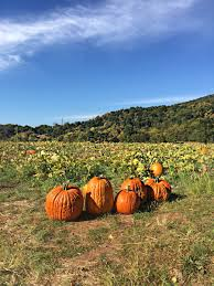 Tims Pumpkin Patch 5k by Chiles Peach Orchard Chilespeachorch Twitter