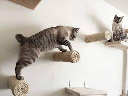 best 25 cat entertainment ideas on pinterest diy cat toys