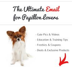 What Kind Of Dogs Shed The Most by How Bad Do Papillons Shed Advice From Real Papillon Owners