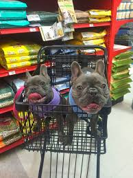 Bed Bath Beyond Burbank by 6 Dog Friendly Stores That Allow Dogs